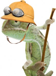 chameleon with safari hat better
