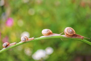snails organism