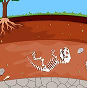 Hydro Fun & Fossils!